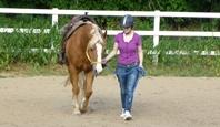 Pferde und reiten