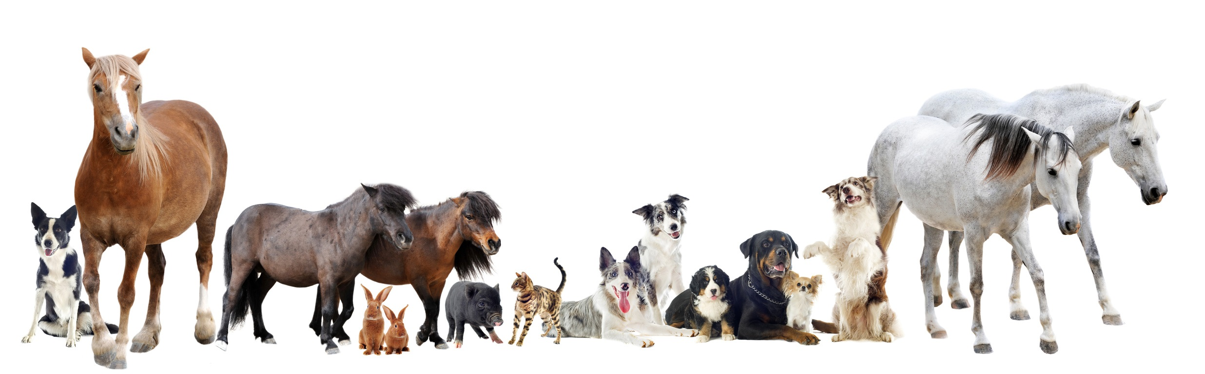 pferde hunde katzen geliebte haustiere  geliebte haustiere