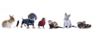 Gruppe von Haustieren - hund katze frettchen