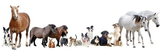 Geliebte Haustiere