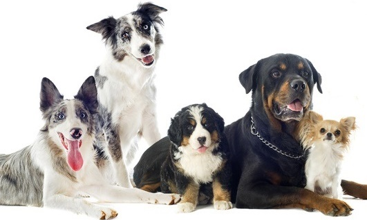 Der ideale Familienhund