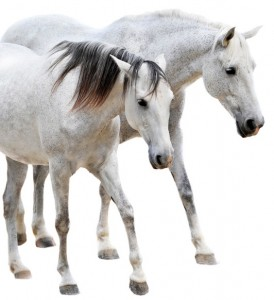 zwei gut gepflegte Pferde