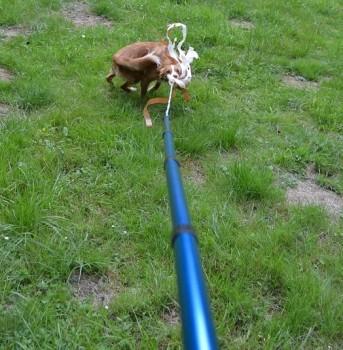 Hunde Reizangel im Einsatz
