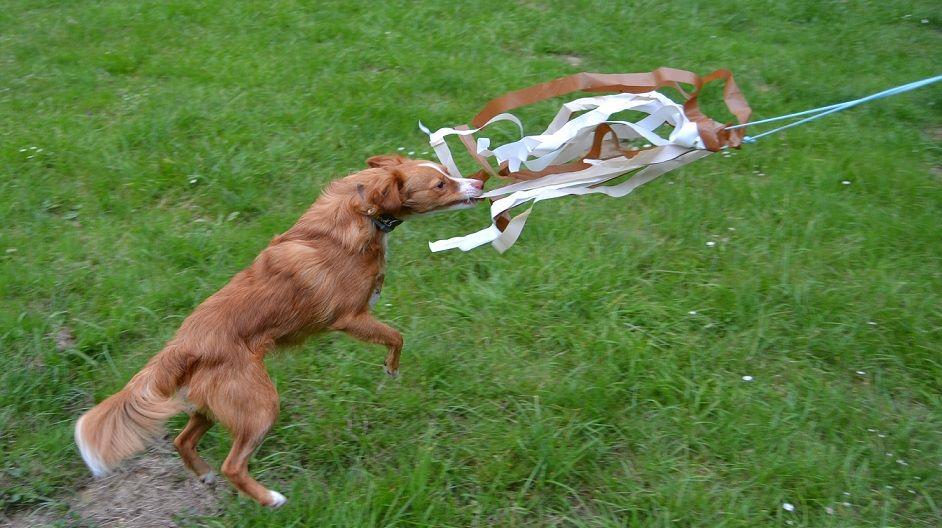Reizangel für Hunde richtig einsetzen