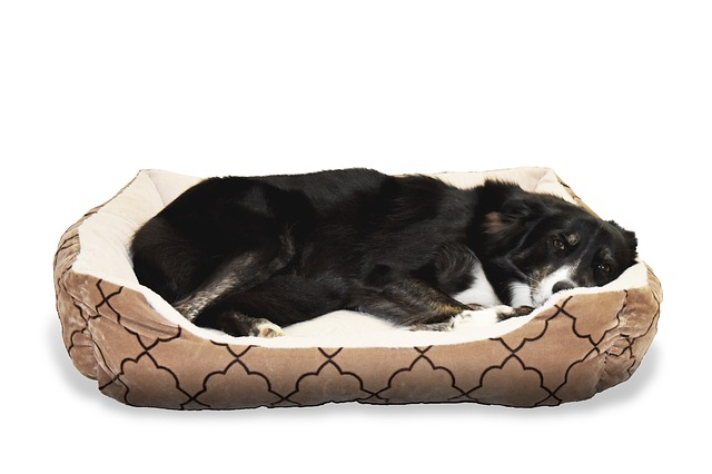 Hund ruht im Hundebett